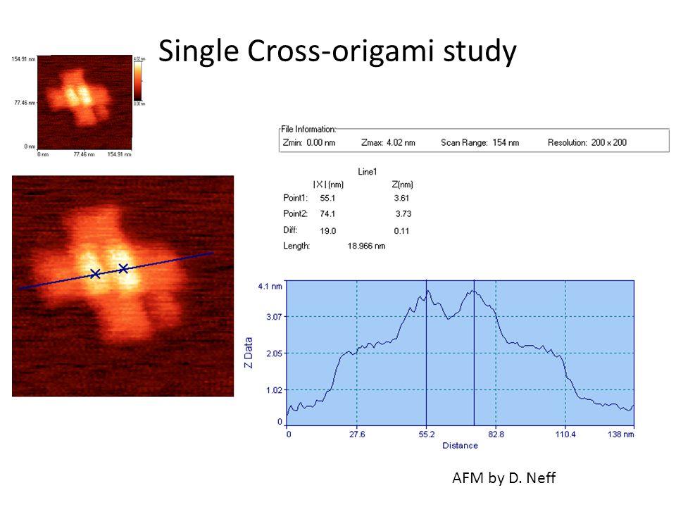 Single Cross-origami study AFM by D. Neff