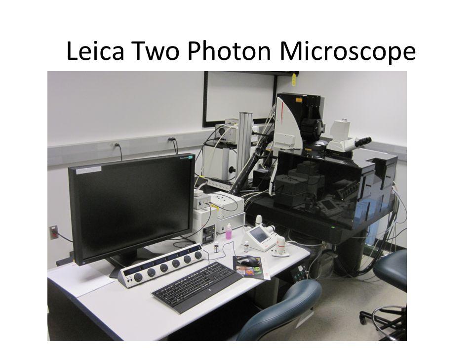 Leica Two Photon Microscope