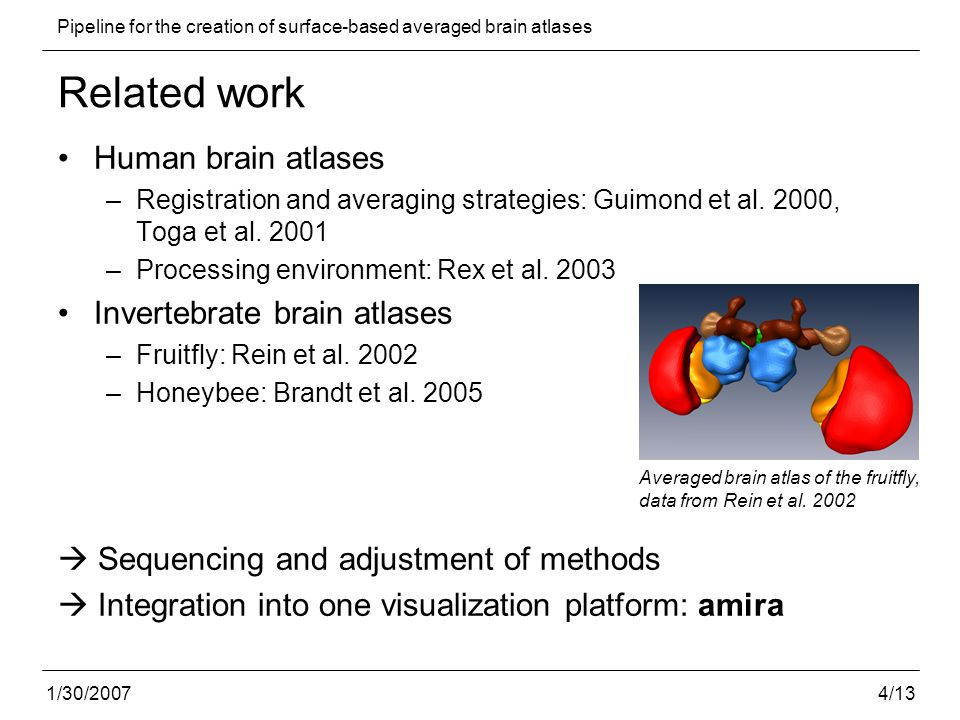 5/13 Pipeline for the creation of surface-based averaged brain atlases 1/30/2007 Pipeline - Overview Imaging and preprocessing Segmentation Averaging Surface reconstruction Schematic overview of the pipeline for the generation of surface- based insect brain atlases