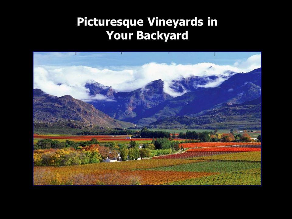 Picturesque Vineyards in Your Backyard