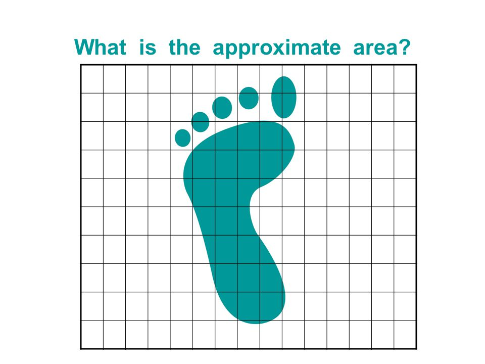 What is the approximate area?