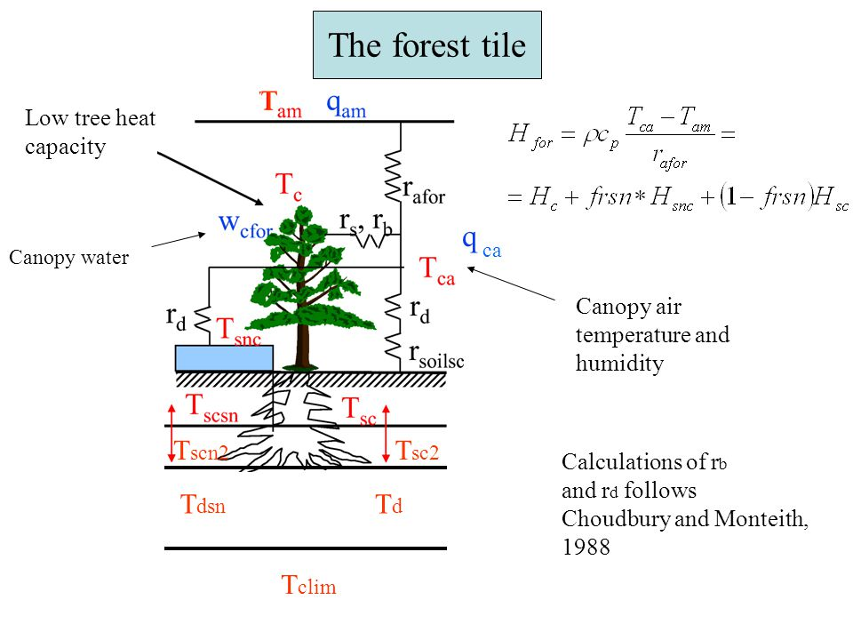 Radiation in the forest We define a view factor viewfs, defined as how much of the incoming SW radiation is passing the canopy and reaching the forest floor.