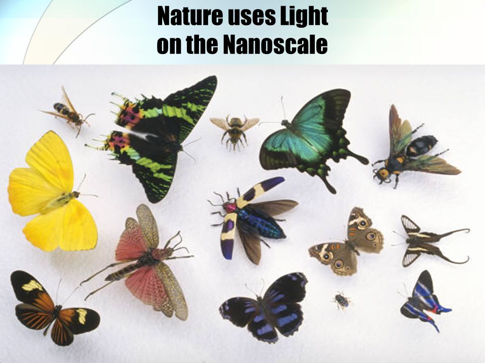 Nature uses Light on the Nanoscale