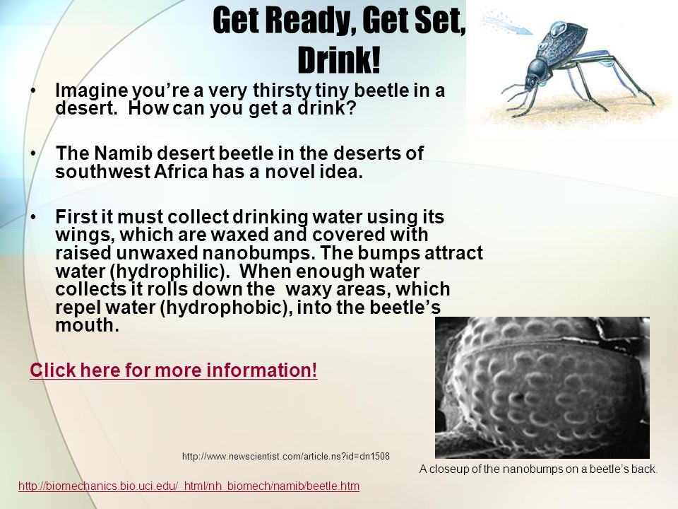 Get Ready, Get Set, Drink. Imagine youre a very thirsty tiny beetle in a desert.