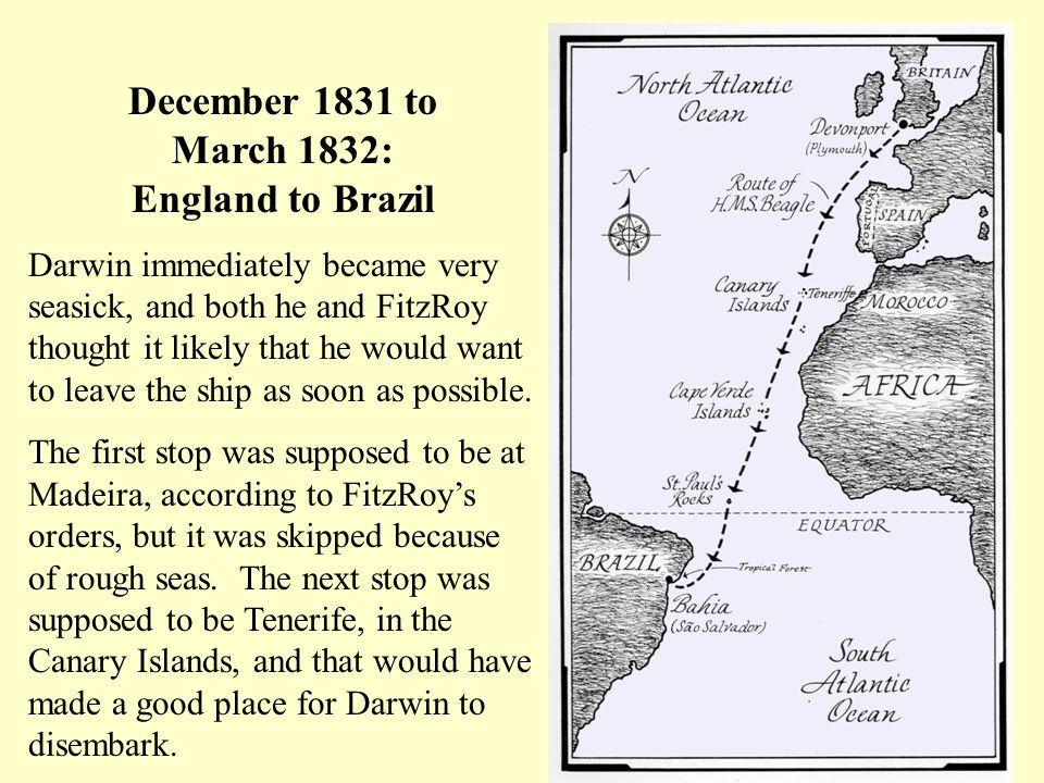 December 1831 to March 1832: England to Brazil Darwin immediately became very seasick, and both he and FitzRoy thought it likely that he would want to leave the ship as soon as possible.