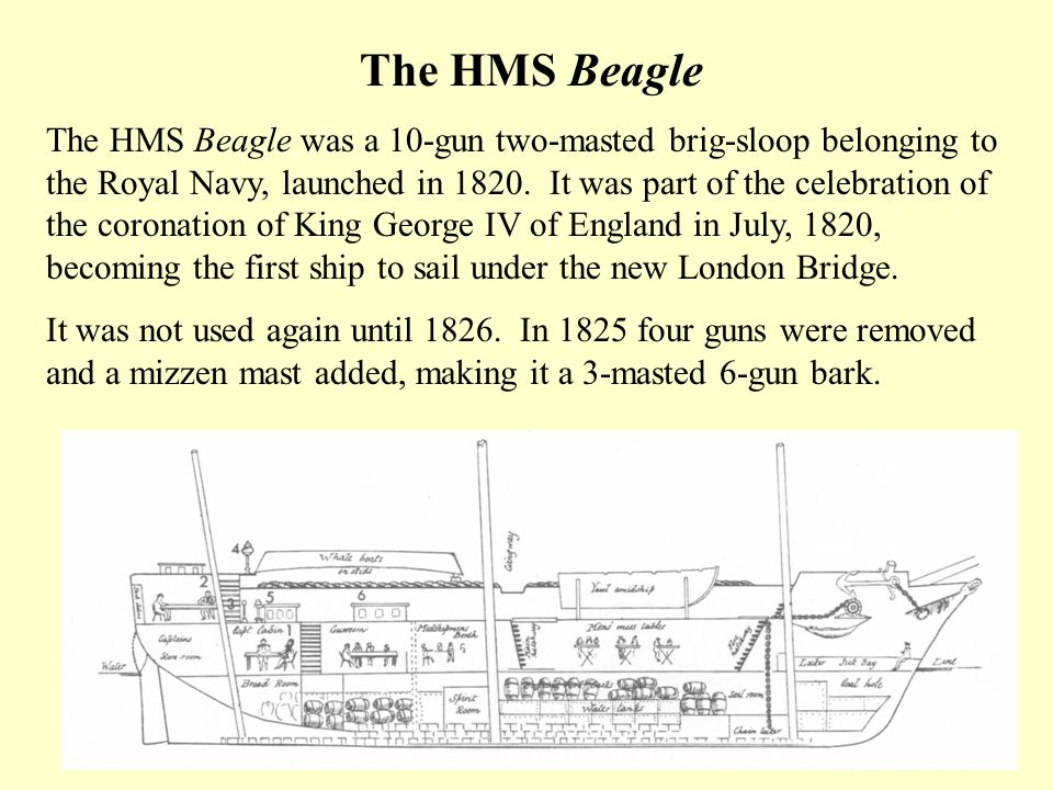 The HMS Beagle The HMS Beagle was a 10-gun two-masted brig-sloop belonging to the Royal Navy, launched in 1820. It was part of the celebration of the