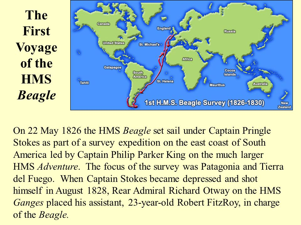 The First Voyage of the HMS Beagle On 22 May 1826 the HMS Beagle set sail under Captain Pringle Stokes as part of a survey expedition on the east coast of South America led by Captain Philip Parker King on the much larger HMS Adventure.
