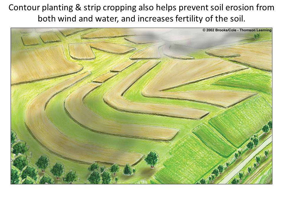 Contour planting & strip cropping also helps prevent soil erosion from both wind and water, and increases fertility of the soil.