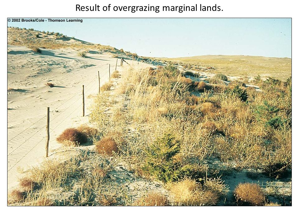 Result of overgrazing marginal lands.