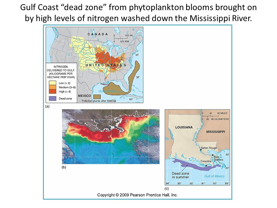 Gulf Coast dead zone from phytoplankton blooms brought on by high levels of nitrogen washed down the Mississippi River.
