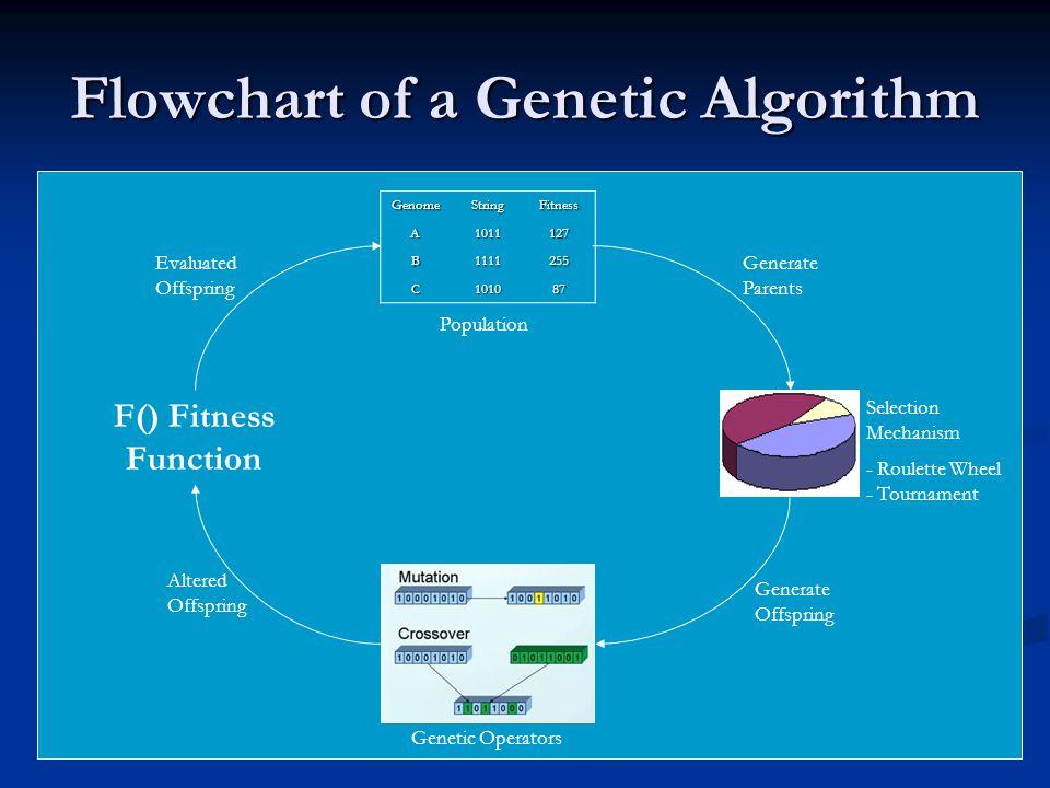 Flowchart of a Genetic Algorithm GenomeStringFitness A1011127 B1111255 C101087 Genetic Operators F() Fitness Function Population Altered Offspring Gen