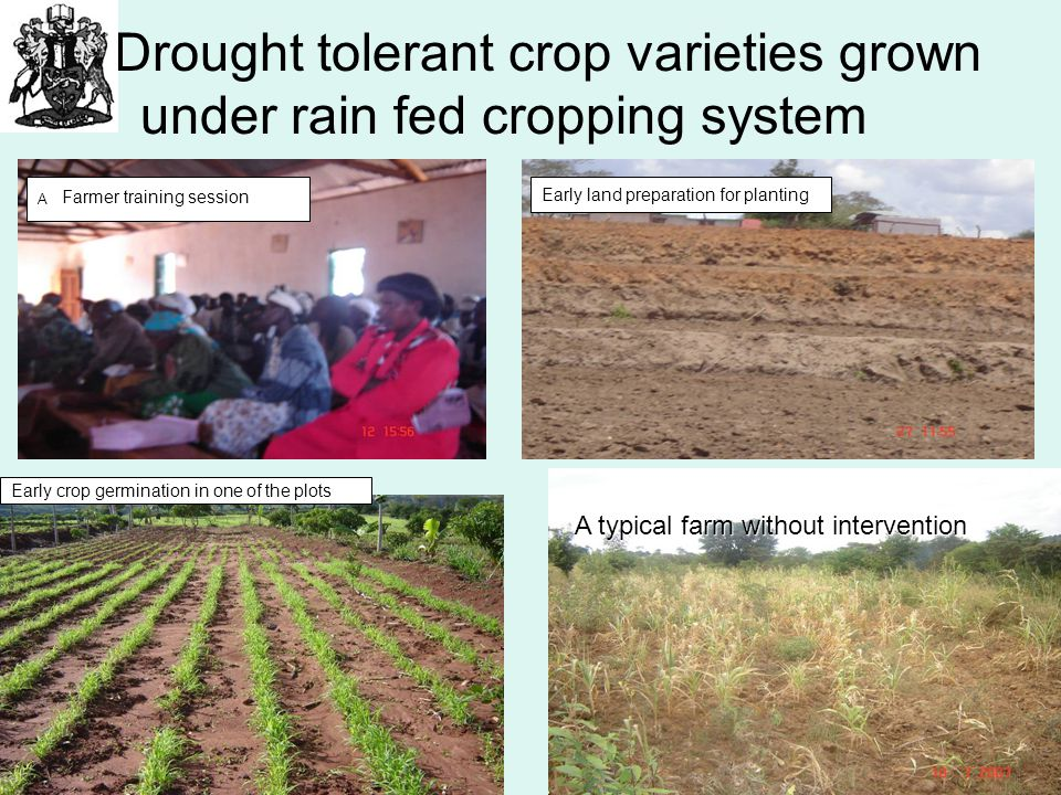 Drought tolerant crop varieties grown under rain fed cropping system A Farmer training session Early land preparation for planting Early crop germinat