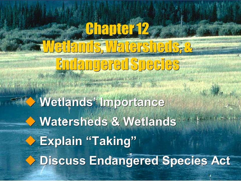 Chapter 12 Wetlands, Watersheds, & Endangered Species uWetlands Importance uWatersheds & Wetlands uExplain Taking uDiscuss Endangered Species Act uWet
