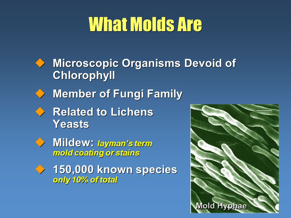 What Molds Are uMicroscopic Organisms Devoid of Chlorophyll uMember of Fungi Family uRelated to Lichens and Yeasts uMildew: laymans term for mold coating or stains u150,000 known species probably only 10% of total uMicroscopic Organisms Devoid of Chlorophyll uMember of Fungi Family uRelated to Lichens and Yeasts uMildew: laymans term for mold coating or stains u150,000 known species probably only 10% of total