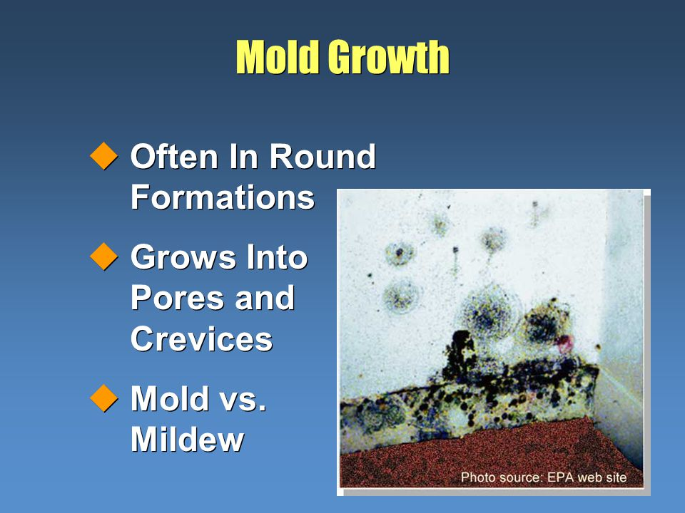 Mold Growth uOften In Round Formations uGrows Into Pores and Crevices uMold vs.