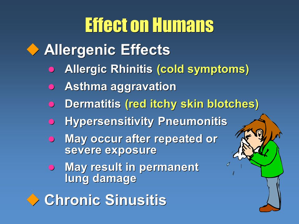 Effect on Humans Allergenic Effects Allergic Rhinitis (cold symptoms) Asthma aggravation Dermatitis (red itchy skin blotches) Hypersensitivity Pneumonitis May occur after repeated or severe exposure May result in permanent lung damage Chronic Sinusitis Allergenic Effects Allergic Rhinitis (cold symptoms) Asthma aggravation Dermatitis (red itchy skin blotches) Hypersensitivity Pneumonitis May occur after repeated or severe exposure May result in permanent lung damage Chronic Sinusitis