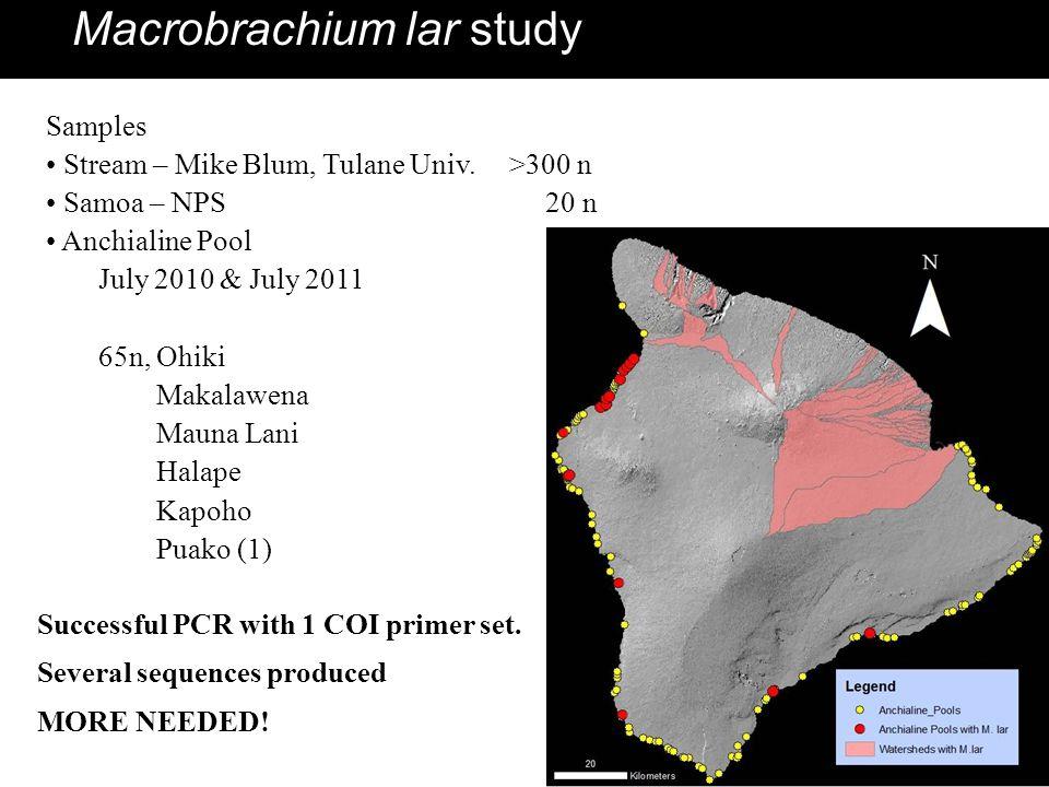 Macrobrachium lar study Samples Stream – Mike Blum, Tulane Univ. >300 n Samoa – NPS 20 n Anchialine Pool July 2010 & July 2011 65n, Ohiki Makalawena M