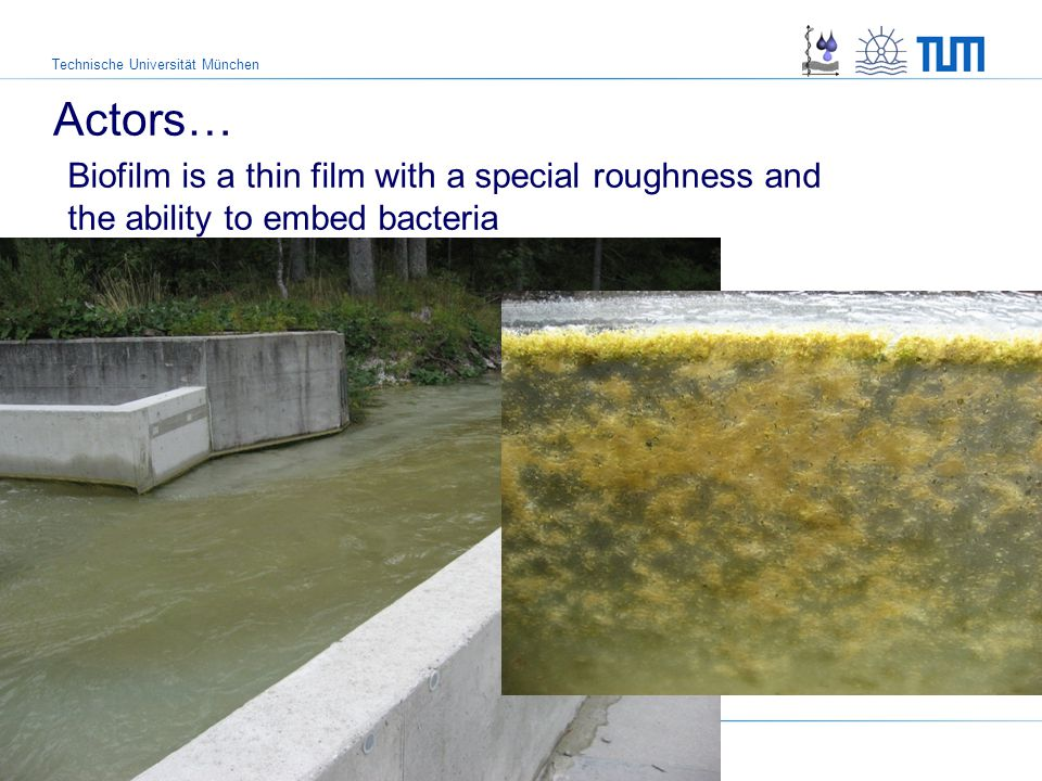 Technische Universität München Actors… Biofilm is a thin film with a special roughness and the ability to embed bacteria