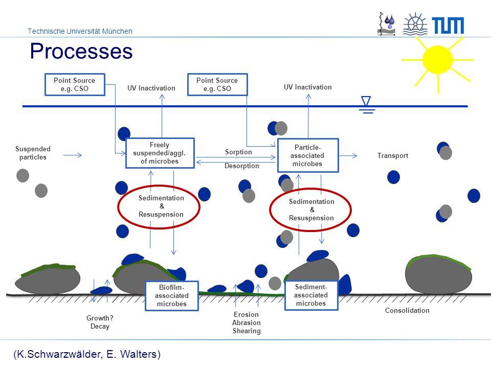 Technische Universität München Processes with special interest How to simulate sedimentation of bacteria: Contaminant transport.