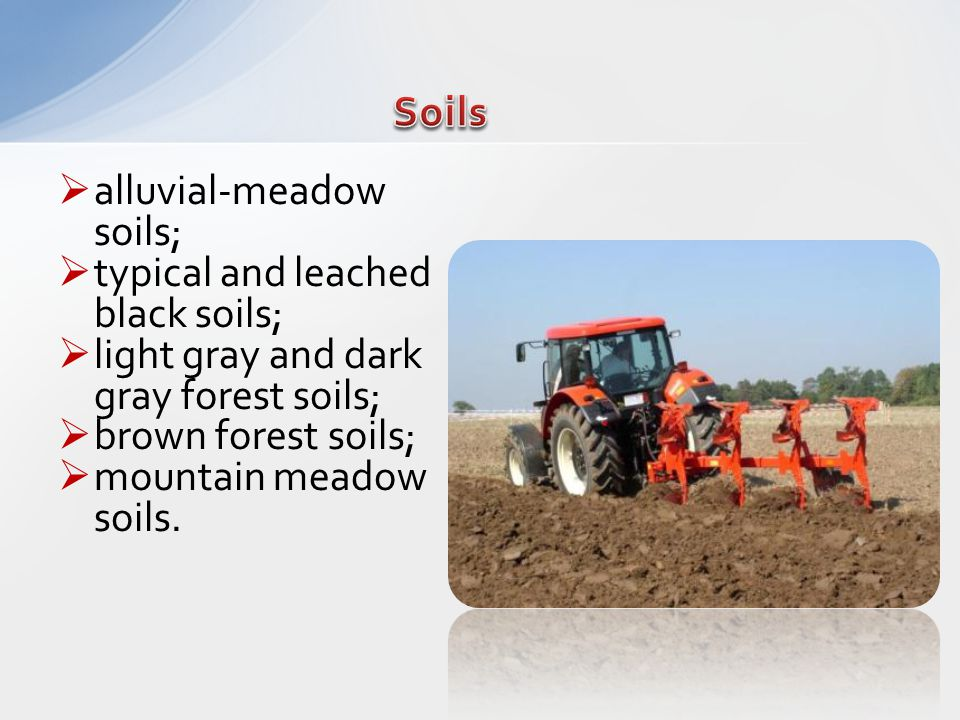 alluvial-meadow soils; typical and leached black soils; light gray and dark gray forest soils; brown forest soils; mountain meadow soils.