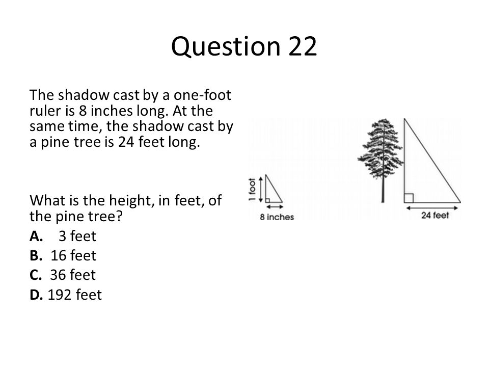 Question 22 The shadow cast by a one-foot ruler is 8 inches long. At the same time, the shadow cast by a pine tree is 24 feet long. What is the height