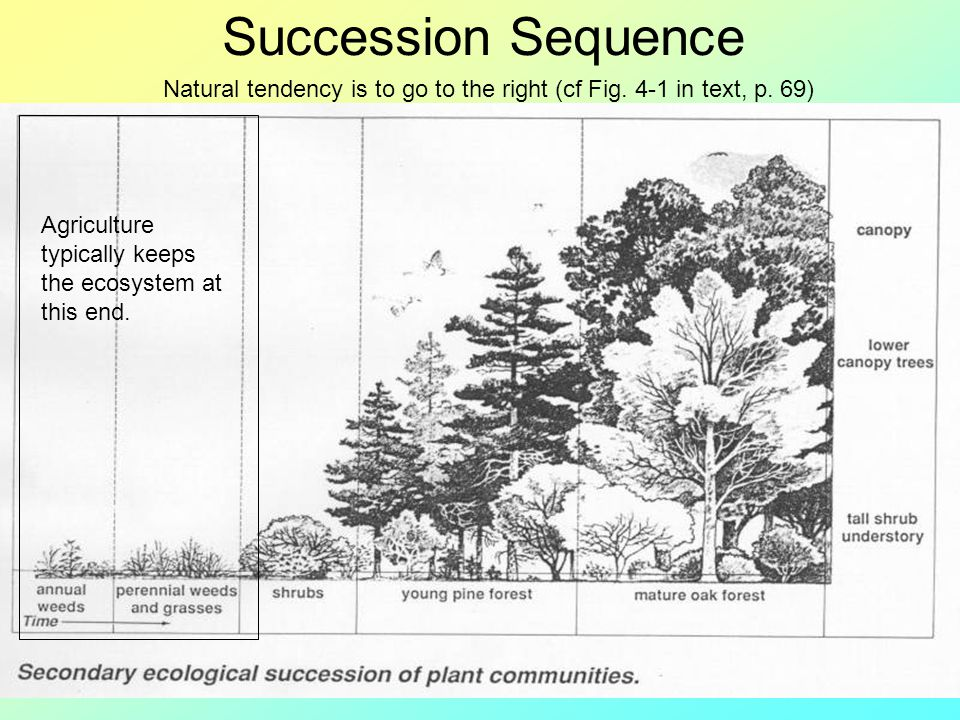 Succession Sequence Agriculture typically keeps the ecosystem at this end. Natural tendency is to go to the right (cf Fig. 4-1 in text, p. 69)