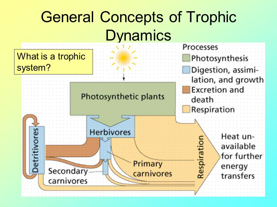 General Concepts of Trophic Dynamics What is a trophic system?