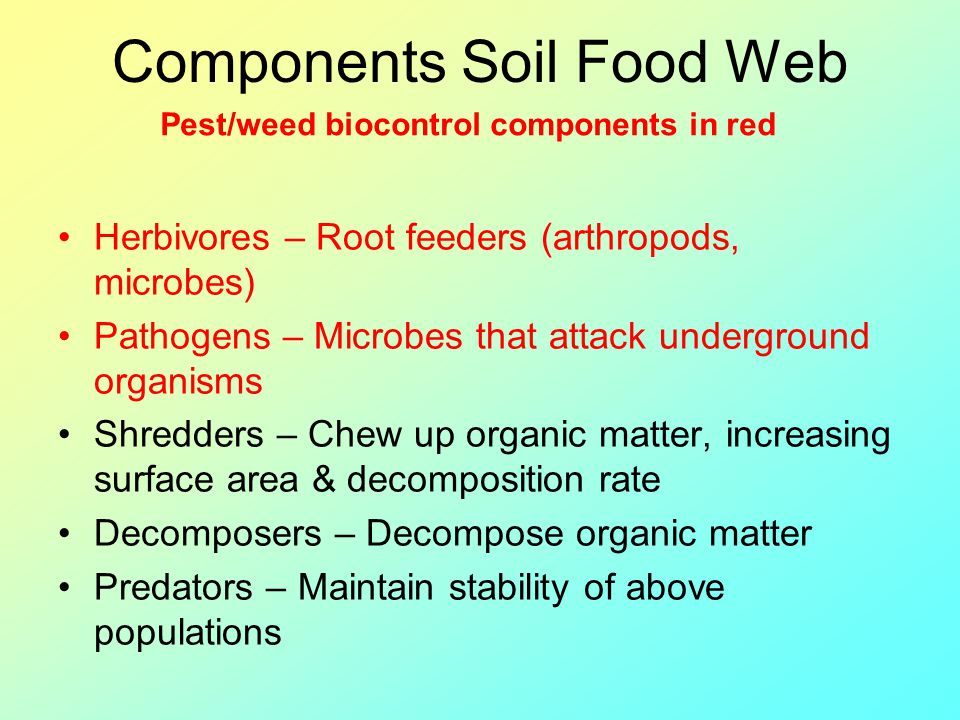 Components Soil Food Web Herbivores – Root feeders (arthropods, microbes) Pathogens – Microbes that attack underground organisms Shredders – Chew up o