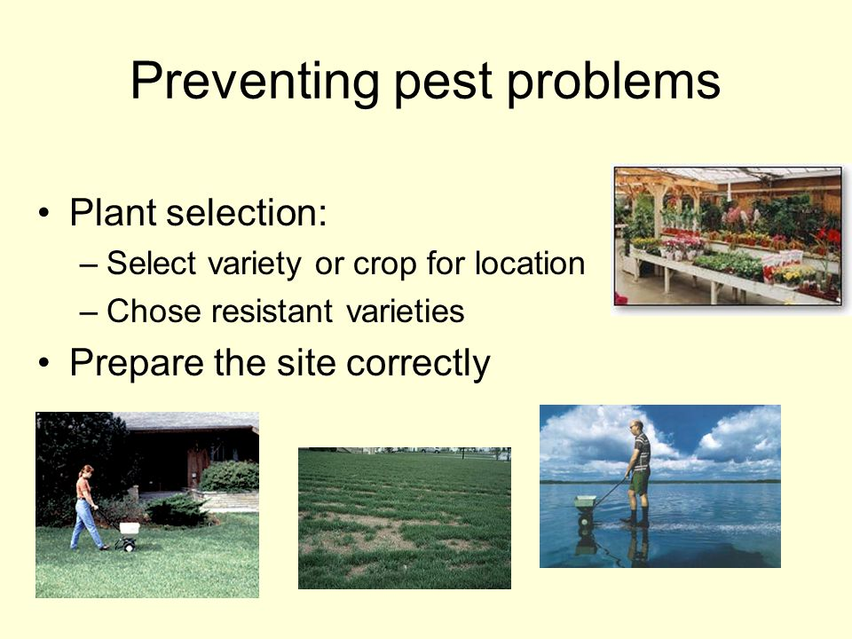 Preventing pest problems Plant selection: –Select variety or crop for location –Chose resistant varieties Prepare the site correctly