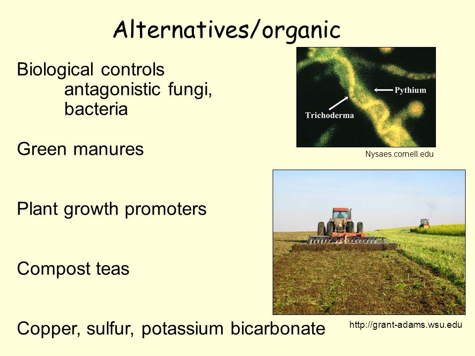 Alternatives/organic Biological controls antagonistic fungi, bacteria Green manures Plant growth promoters Compost teas Copper, sulfur, potassium bicarbonate http://grant-adams.wsu.edu Nysaes.cornell.edu