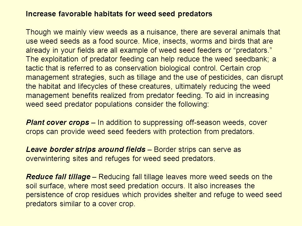 Increase favorable habitats for weed seed predators Though we mainly view weeds as a nuisance, there are several animals that use weed seeds as a food source.