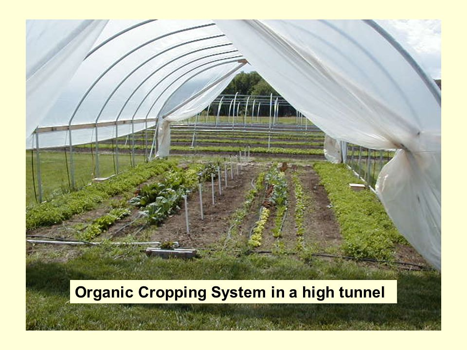 Organic Cropping System in a high tunnel