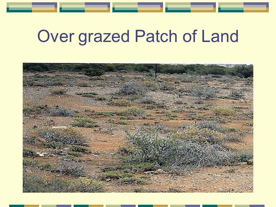 Over grazed Patch of Land
