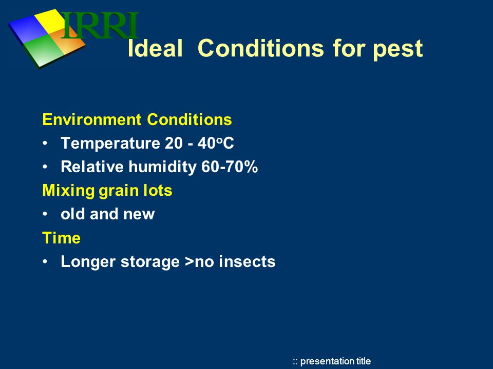 :: presentation title Common Post harvest insects Lesser grain borer (Rhzopertha dominica), Rice weevil (Sitophilus oryzae), Angoumois grain moth (Sitotroga cerealella), Red flour beetle (Tribolium castaneum) Lifecycle Beetles 15-18 days Moths 28 - 35 days