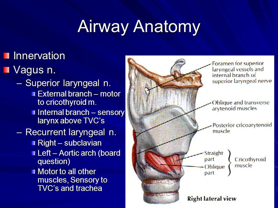 Airway Anatomy Innervation Vagus n. –Superior laryngeal n. External branch – motor to cricothyroid m. Internal branch – sensory larynx above TVCs –Rec