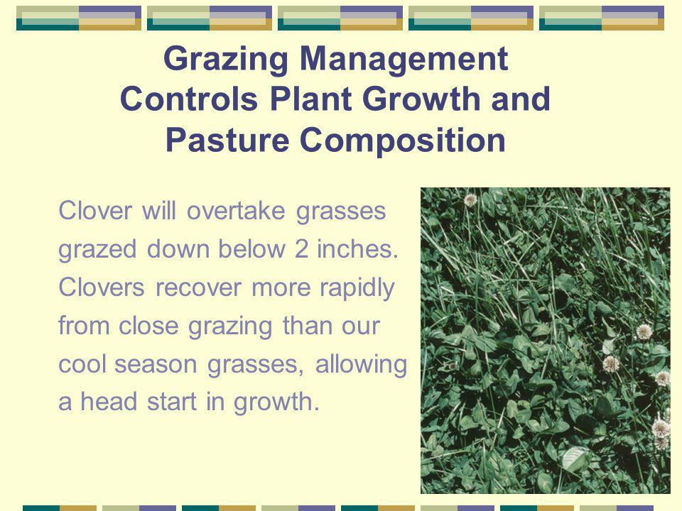 Influence of Stage of Growth on Plant Nutrient Content Orchardgrass Nutrient Stage of Growth %DMLeafy Boot Head Bloom C.P. 33.9 17.6 10.1 7.8 P 0.41 0