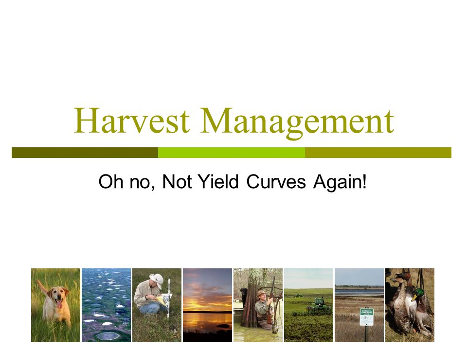 Harvest Management Oh no, Not Yield Curves Again!