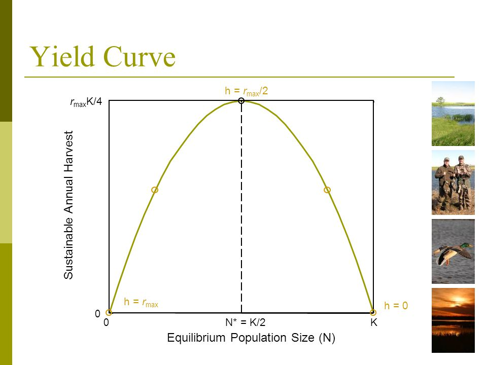 Sustainable Annual Harvest Equilibrium Population Size (N) 0 N* = K/2K 0 r max K/4 h = r max h = r max /2 h = 0 Yield Curve