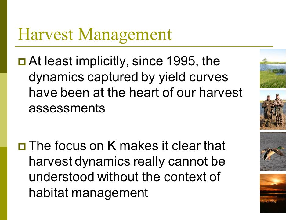 Harvest Management At least implicitly, since 1995, the dynamics captured by yield curves have been at the heart of our harvest assessments The focus
