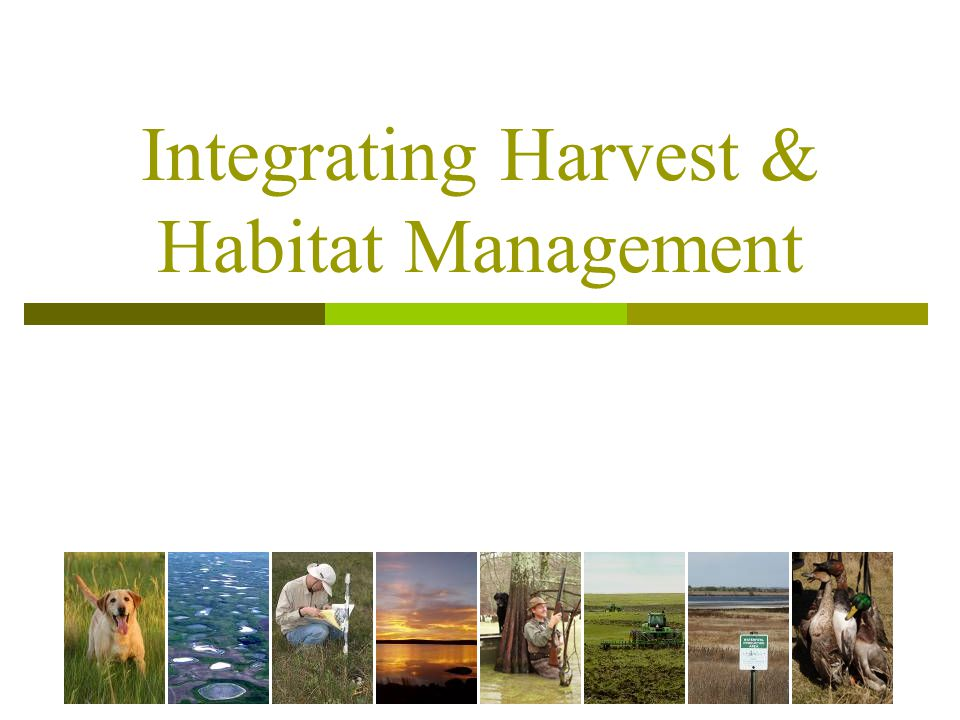 Integrating Harvest & Habitat Management