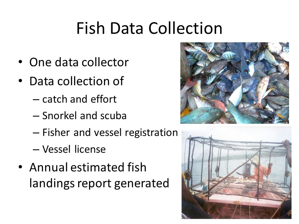 Fish Data Collection One data collector Data collection of – catch and effort – Snorkel and scuba – Fisher and vessel registration – Vessel license Annual estimated fish landings report generated