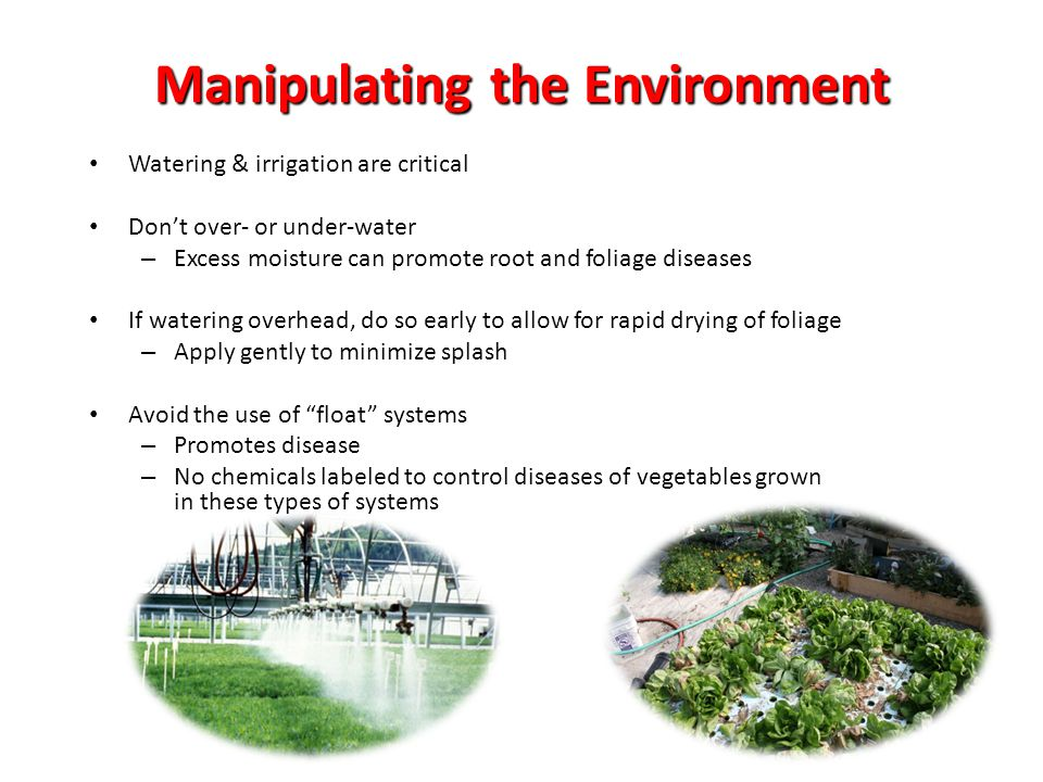 Manipulating the Environment Watering & irrigation are critical Dont over- or under-water – Excess moisture can promote root and foliage diseases If w