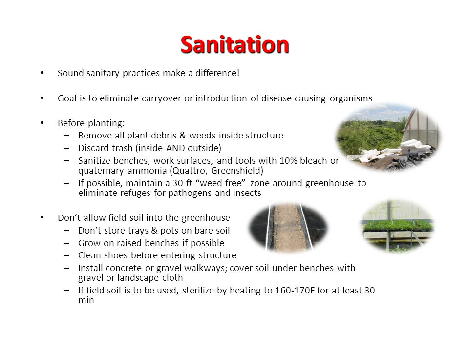 Sanitation Sound sanitary practices make a difference! Goal is to eliminate carryover or introduction of disease-causing organisms Before planting: –