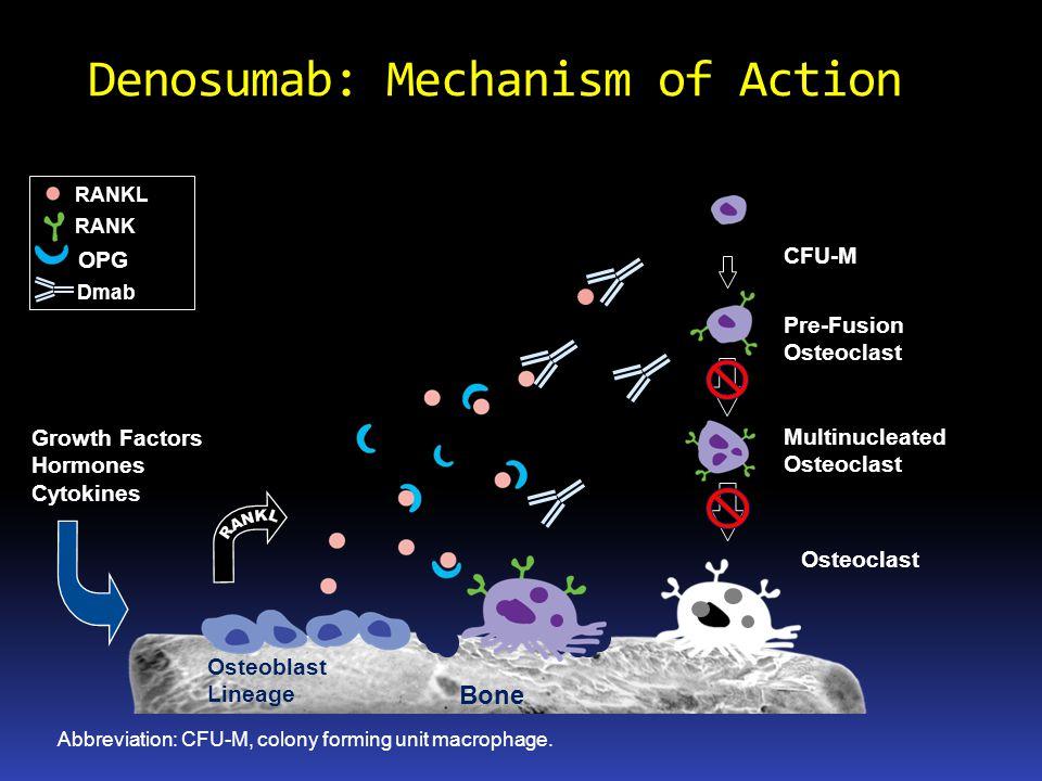 Denosumab: Mechanism of Action Growth Factors Hormones Cytokines Bone Abbreviation: CFU-M, colony forming unit macrophage. Osteoblast Lineage Osteocla