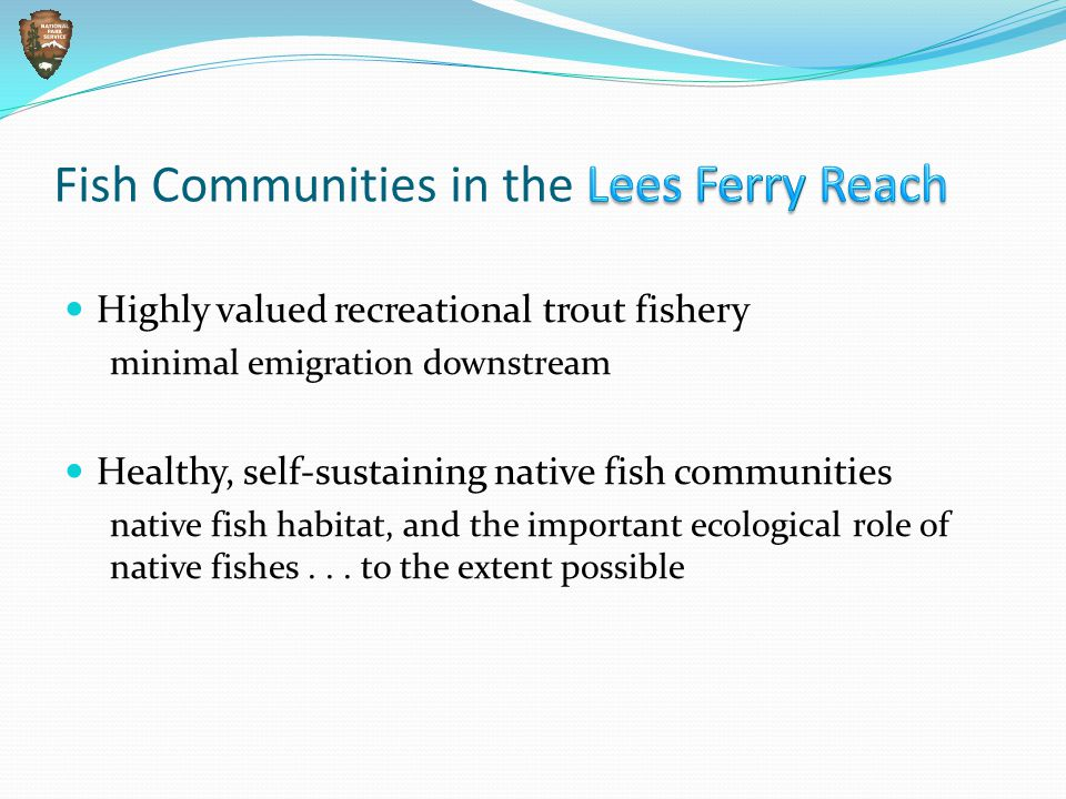 Fish Communities in the Lees Ferry Reach Highly valued recreational trout fishery minimal emigration downstream Healthy, self-sustaining native fish communities native fish habitat, and the important ecological role of native fishes...