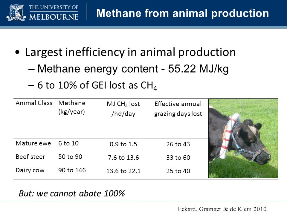 Animal ClassMethane (kg/year) MJ CH 4 lost /hd/day Effective annual grazing days lost Potential km driven in 6-cylinder car Mature ewe6 to to to to 90 Beef steer50 to to to to 800 Dairy cow90 to to to to 1350 Methane from animal production Largest inefficiency in animal production –Methane energy content MJ/kg –6 to 10% of GEI lost as CH 4 But: we cannot abate 100% Eckard, Grainger & de Klein 2010