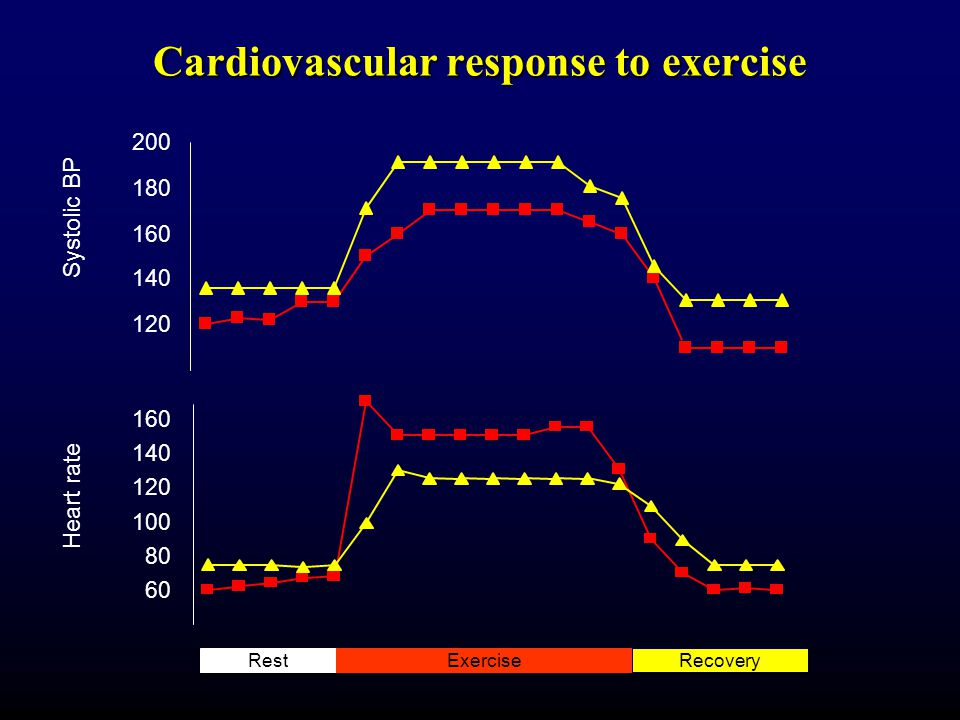 Cardiovascular response to exercise 120 140 160 180 200 60 80 100 120 140 160 Heart rate Systolic BP RestExerciseRecovery