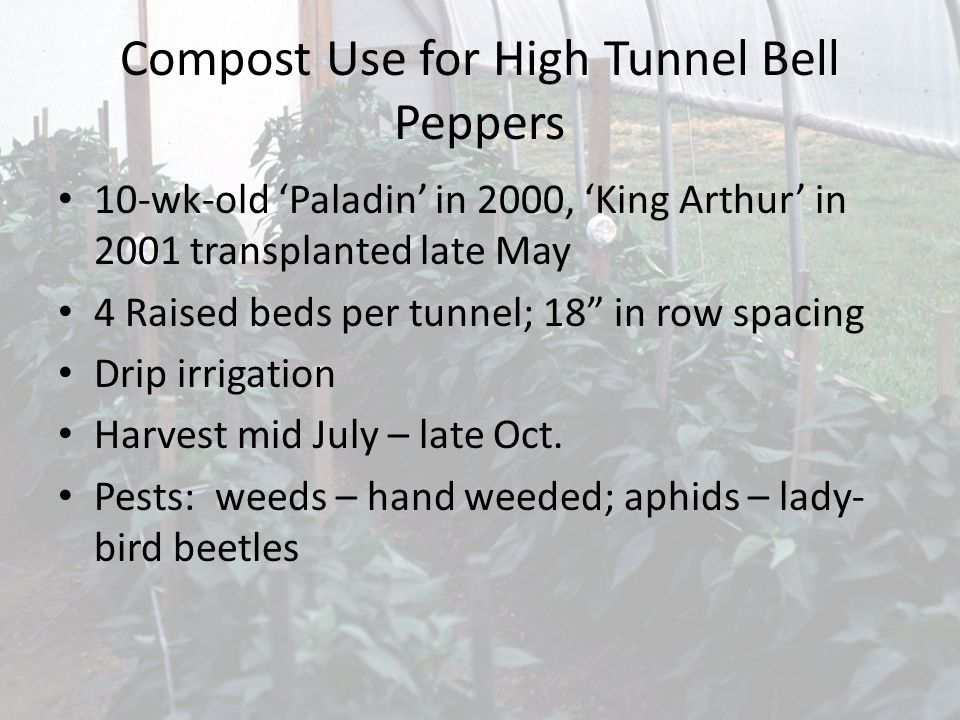 Compost Use for High Tunnel Bell Peppers 10-wk-old Paladin in 2000, King Arthur in 2001 transplanted late May 4 Raised beds per tunnel; 18 in row spacing Drip irrigation Harvest mid July – late Oct.