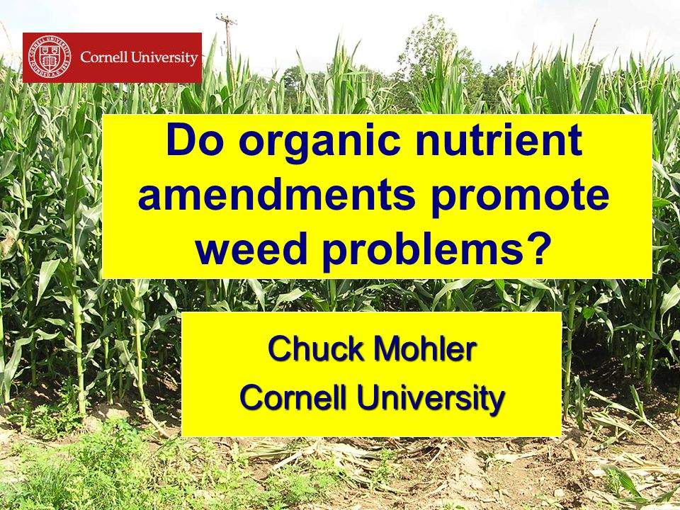 Do organic nutrient amendments promote weed problems Chuck Mohler Cornell University