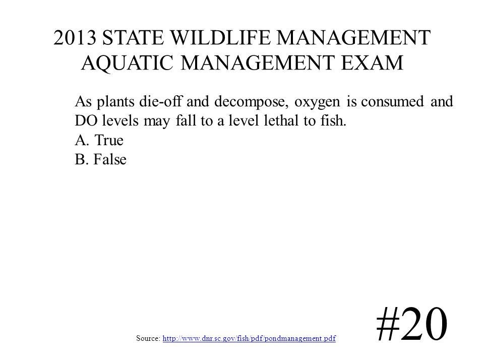 2013 STATE WILDLIFE MANAGEMENT AQUATIC MANAGEMENT EXAM Source: http://www.dnr.sc.gov/fish/pdf/pondmanagement.pdfhttp://www.dnr.sc.gov/fish/pdf/pondmanagement.pdf #20 As plants die-off and decompose, oxygen is consumed and DO levels may fall to a level lethal to fish.